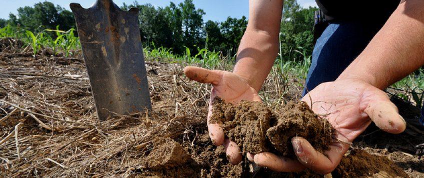 soil-in-hands